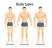 Manliga kroppstyper royaltyfri illustrationer