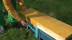 Manliga målarehänder som rymmer borsten och kruset med målarfärg som målar träyttersida i gul färg 4K arkivfilmer