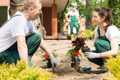 Manliga och kvinnliga trädgårdsmästare som planterar blommor Arkivbild