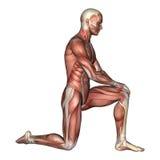 Manligt anatomidiagram stock illustrationer