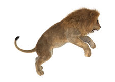 manligt lejon för tolkning 3D på vit Royaltyfri Foto