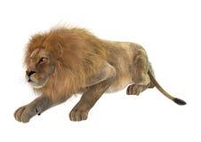 Manligt lejon på vit Arkivfoton