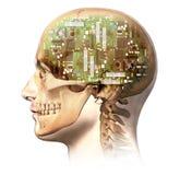 Manligt mänskligt huvud med skallen och den konstgjorda behån för elektronisk strömkrets