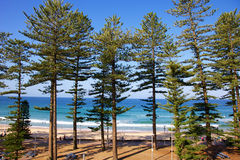 Manly Beach Australia. Manly Beach in New South Wales Australia, a surfing suburb in Sydney Stock Images
