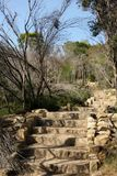Manly Scenic Walkway. Stairs leading up a hill along the Manly Scenic Walkway, Australia Stock Photo
