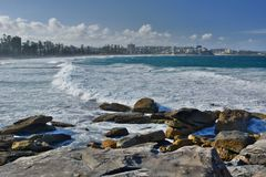 Manly strand sydney Australien fields den nya södra dalen wales för druvajägaren australasian Arkivbild