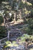 Manmade каменные лестницы в лесе стоковая фотография rf
