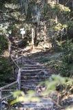 Manmade stentrappa i skogen royaltyfri fotografi