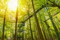 Manmade struktura i most doświadczać treetops przygody wyzwanie w lesie zdjęcie stock
