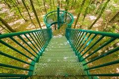 Manmade struktura i most doświadczać treetops przygody wyzwanie w lesie zdjęcia stock
