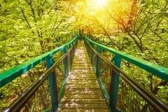 Manmade struktura i most doświadczać treetops przygody wyzwanie w lesie fotografia royalty free