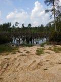 Manmade Swamp Patrick SC royalty free stock image