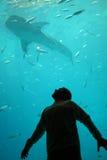 Mann-überwachender Haifisch Stockbild