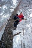 Mann auf Baum Stockbild