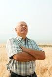Mann auf dem Gebiet des Weizens Stockbild