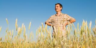 Mann auf dem Gebiet des Weizens Stockfotografie