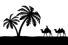 Mann auf dem Kamel in den Palmen. Lizenzfreie Stockbilder