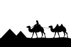 Mann auf dem Kamel der Pyramiden. Stockbilder