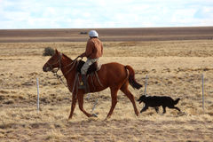 Mann auf dem Pferd mit Viehhund stockfotografie