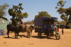 Mann auf dem Warenkorb, der durch Vieh gezogen wird Lizenzfreies Stockbild