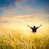 Mann auf dem Weizengebiet Stockfotos
