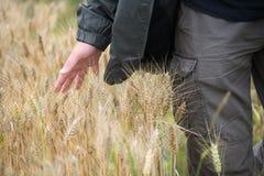 Mann auf dem Weizengebiet stockfoto