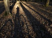 Mann auf Fahrrad durch Holz lizenzfreies stockfoto