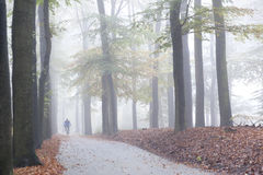 Mann auf Mountainbike im nebelhaften Wald des frühen Morgens im unteren Lizenzfreies Stockfoto