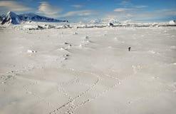 Mann auf Schnee und Eis in Antarktik lizenzfreies stockfoto