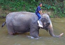 Mann badet Elefanten im Fluss Stockfoto