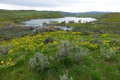 Mann Creek behållare, Idaho royaltyfria foton