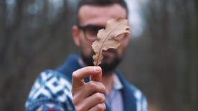 Mann in den Gläsern geht durch den Herbstwald und betrachtet den Eichenblattabschluß oben stock video footage