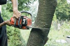 Mann in den Handschuhen, die Baum mit einer Kettensäge in einem Garten schneiden lizenzfreies stockbild