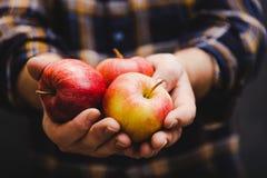Mann, der Äpfel in seinen Händen tragen Flanell hält lizenzfreie stockfotografie