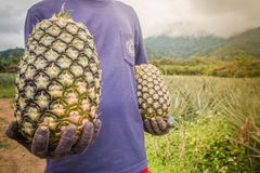 Mann, der Ananas hält Stockfotos