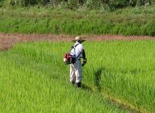 Mann, der auf dem Reisgebiet arbeitet Lizenzfreie Stockfotografie