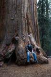 Mann, der auf einem Mammutbaum sitzt Lizenzfreies Stockfoto