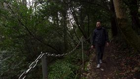 Mann, der auf einen Weg im grünen Wald der EibeBuchsbaumwaldung in Sochi, Russland geht stock video