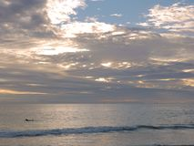 Mann, der auf Surfbrett schaufelt Stockbild