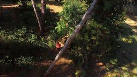 Mann, der auf Waldweg rüttelt stock footage