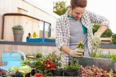Mann, der Behälter auf Dachspitzen-Garten pflanzt Stockfoto