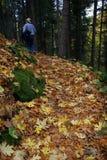 Mann, der in Blätter geht. Lizenzfreie Stockfotografie