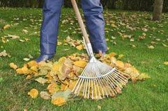 Mann, der Blätter im Garten harkt Lizenzfreie Stockfotografie