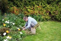 Mann, der Blumen pflanzt stockfoto