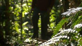 Mann, der das Gehen in Freien-Dschungel wandert stock footage