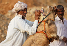 Mann, der das Kamel steuert Stockbild