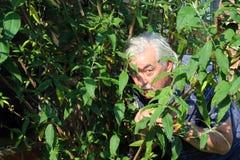 Mann, der in den Büschen sich versteckt. Lizenzfreies Stockfoto