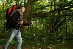 Mann, der durch bewaldeten Bereich wandert Stockbilder
