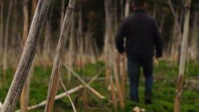 Mann, der ein Feld von getrocknet hogweed kreuzt stock footage