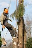 Mann, der ein Kapitel des Baums senkt Stockfotografie